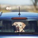 Autónyitás Budapesten – kutya a pácban